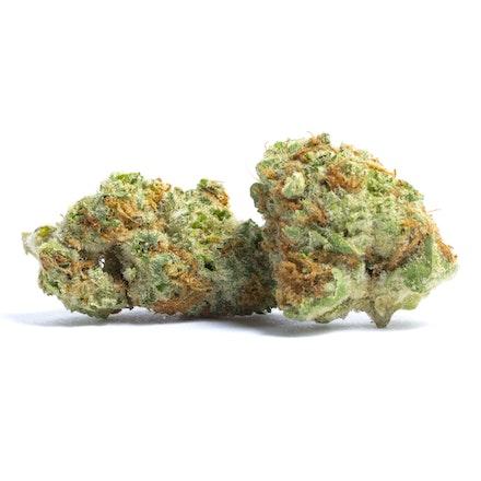 Picture of Papaya strain