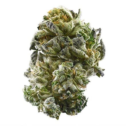 Picture of GSC strain