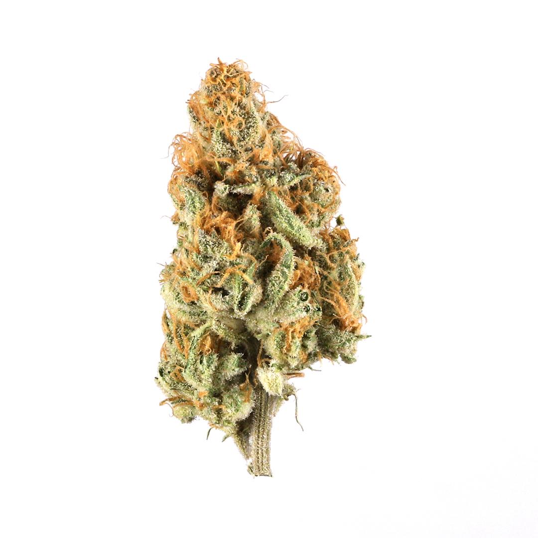 Orange Creamsicle Marijuana Strain Information   Leafly