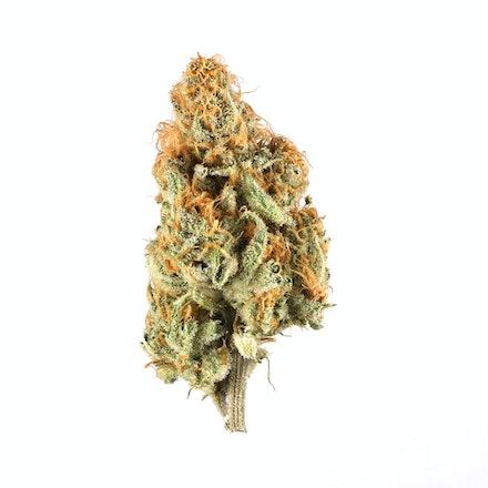 Picture of Orange Creamsicle strain